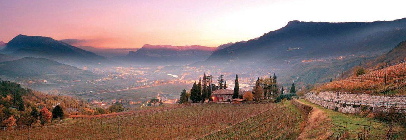 Vini rossi Trentino